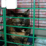 Feral cats trapped through Google TNR program